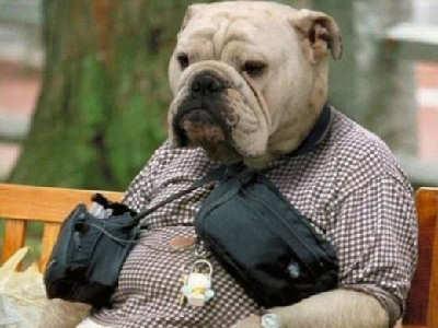 bulldog-man