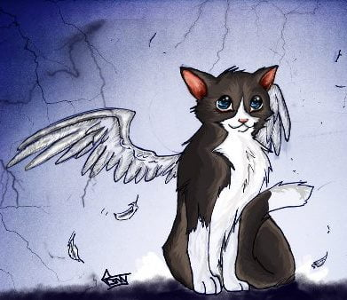 Cat_with_wings